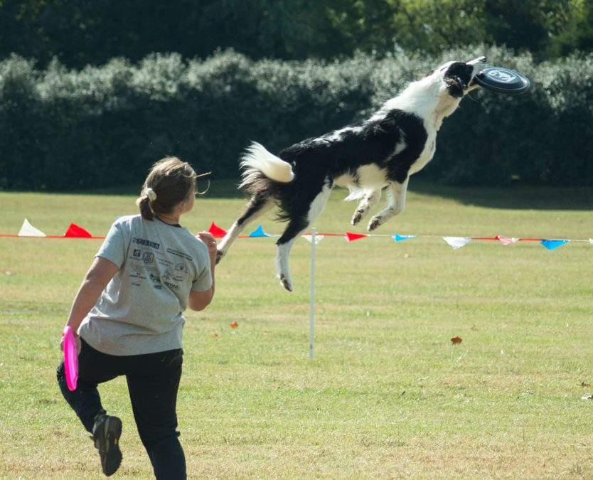 Impressive US Dog Agility Association Competition Thrilling Frisbee